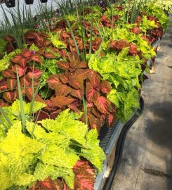 EVER-GREEN GREENHOUSES LTD – 403-347-6484 …Red Deer AB