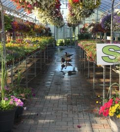 HILLTOP GREENHOUSES – 403-635-7931 …Monarch AB hillgreen@hotmail.com