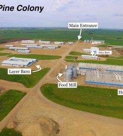 LONE PINE FARM FRESH CHICKEN – 403-742-3454 …Botha AB
